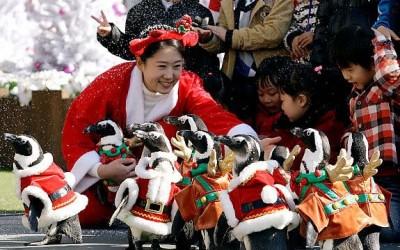 Корейский Новый год!